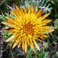 Sambukina: Escumosos Naturals de Flors.